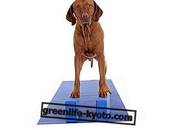 Yoga øvelser med blokke