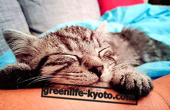 Le 17 février est la Journée internationale des chats