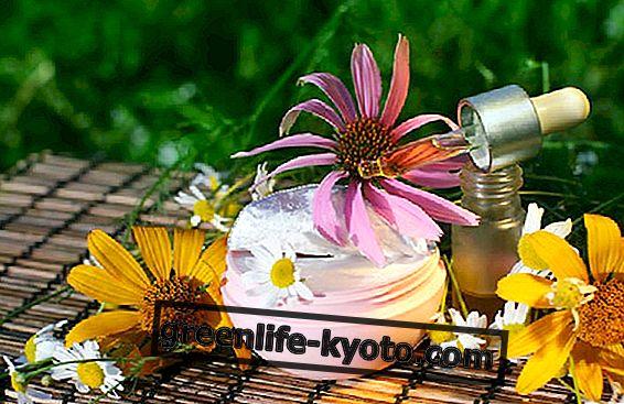 Creme de Echinacea: a receita e os usos