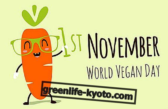 1. november maailma Veganipäev