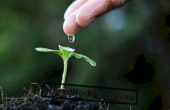 Kepekaan sayur: tumbuhan juga mempunyai deria