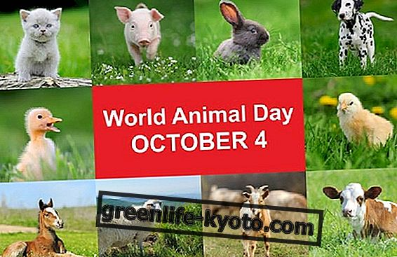 Október 4., World Animal Day