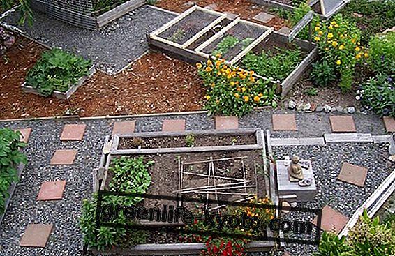 Pozrime sa na Urban Farming