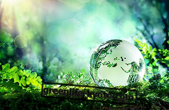 Sní o svém Světovém dni životního prostředí