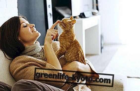 बिल्लियों की चिकित्सीय शक्ति