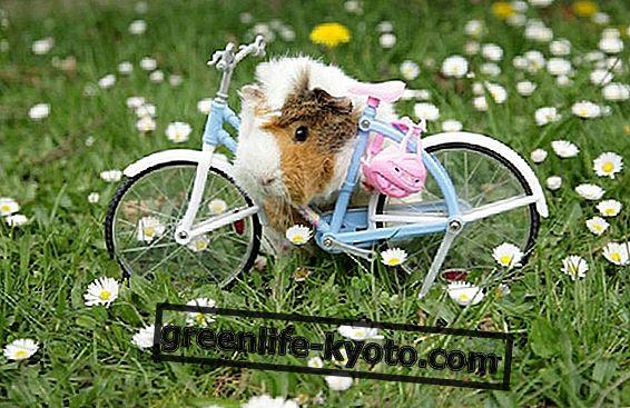 이탈리아의 생태 환경 : 유기농 제품 중 자전거 대여 및 애완 동물 친화적 인 제품