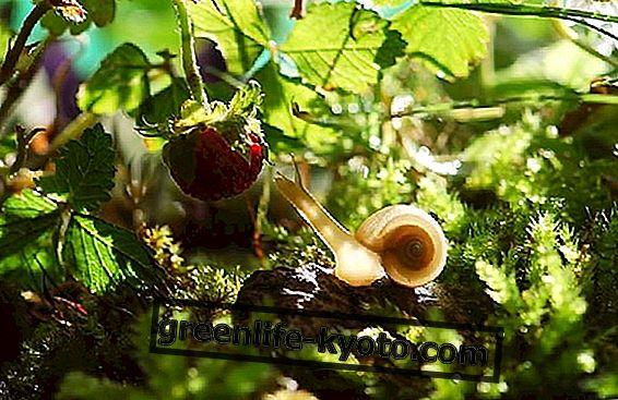 Съедобный сад: что это такое и как это сделать
