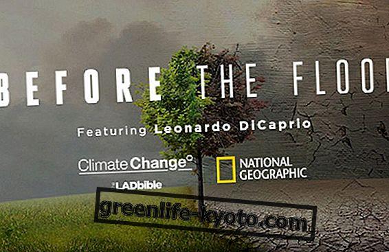 Antes del diluvio, el documental de Leonardo DiCaprio.