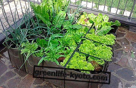 Зеленчукова градина на терасата
