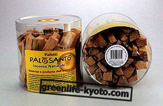 Palo Santo, seribu kegunaan tumbuhan tropika